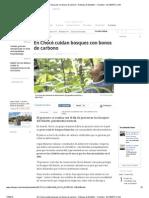 En Chocó cuidan bosques con bonos de carbono - Noticias de Medellín - Colombia - ELTIEMPO
