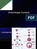 6774682-Embriologia-A1
