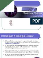 Biologia Celular Organelas