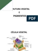 ESTRUTURAVEGETAL+AULA+DE+HORTALIÇAS