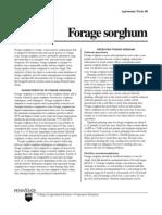 Forage Sorghum Agfact48 Cropsoil PsuEDU