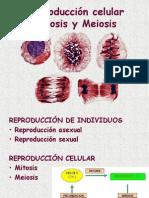 Bio 09 Mitosis y Meiosis (1)