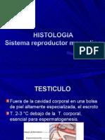 Sistema Reproductor Maculino