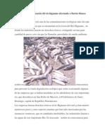 Contaminacion Del Higuamo