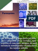 Parenquima08B