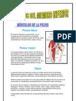 monografia de anatomia.docx
