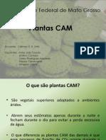 Plantas Cam ( w., A. j., r., j., A.)