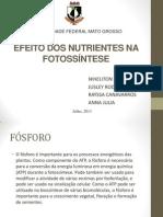 Falta de Nutrientes Na Fotossintese