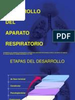 Desarrollo Del Apto Respiratorio