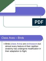 0001_ Birds_1