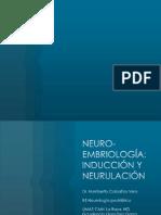 Inducción y neurulación