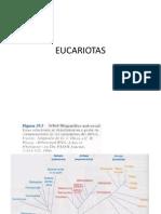 4.-EUCARIOTAS-1