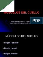 2 MÚSCULOS DEL CUELLO (1)