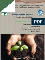 Trabalho de Ecologia - Professora Rosangêla