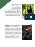 Animales en Peligro Honduras