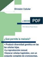 4.2  Meiosis (2012)
