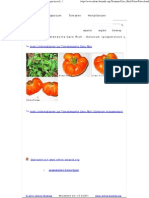 Fotos Der Tomatensorte Caro Rich - Solanum Lycopersicon L