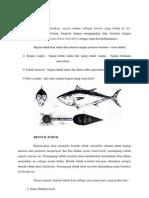 Morfologi Ikan