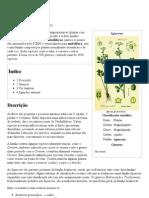 PLANTA Apiaceae