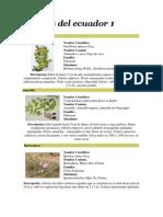 Especies de Flora