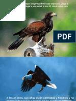 Aprender y Reap Render Para Vivir Como El Aguila