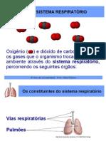 Constituintes Do Sistema Respiratorio 1