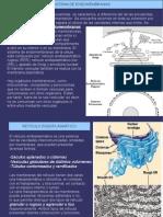 Sistema de Endomenbranas