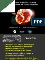 Anatomia Ecografica Normal y Malformacion