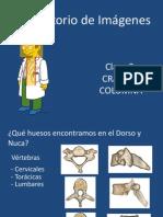 Columna y craneo.pdf