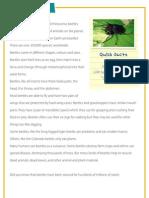 Beetles - Reading comprehension