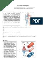 Guía Sistema circulatorio 5° basico