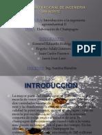 Diapositivas Del Champan[1]