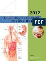 absorcion-nutrientes