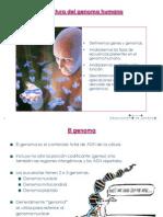 Genoma_09