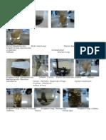 Kingdom Eubacteria, Archaebacteria, Fungi, Protista