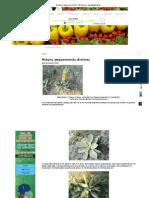 Φλόμος_ φαρμακευτικές ιδιότητες _ agrotikabook