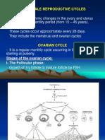 Ovarian Cycle & Menestrual Cycle