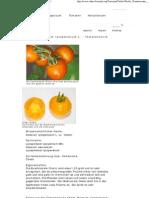 Chello - Solanum Lycopersicum L