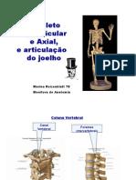 14960983 Anatomia Revisao de Ossos