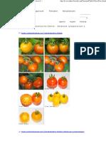 Fotos Der Tomatensorte Chello - Solanum Lycopersicon L