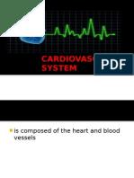 Cardivascular System