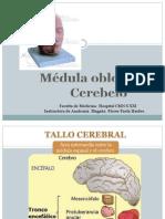 Medula y Cerebelo