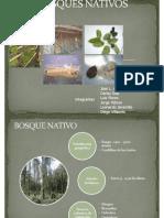 Bosque Andino