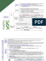 Genetica Molecular Esquema