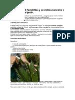 Cómo hacer 10 Fungicidas y pesticidas naturales y caseros para el jardín
