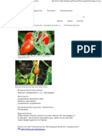 Comasagua - Solanum Lycopersicum L
