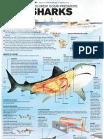 Hawaii's Great Ocean Predators