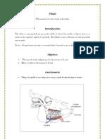 cronometria dentaria.docx