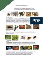 Animales Invertebrados y Vertebrados 2