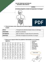 Guia Sistema Digestivo